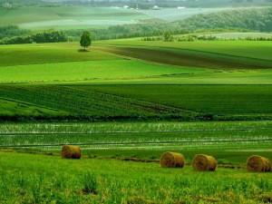 pertanian-organik2